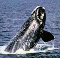050721_whales